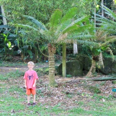 mini palm tree